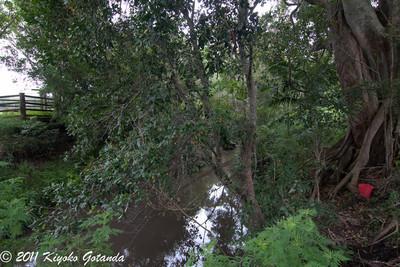 Sawpit Creek