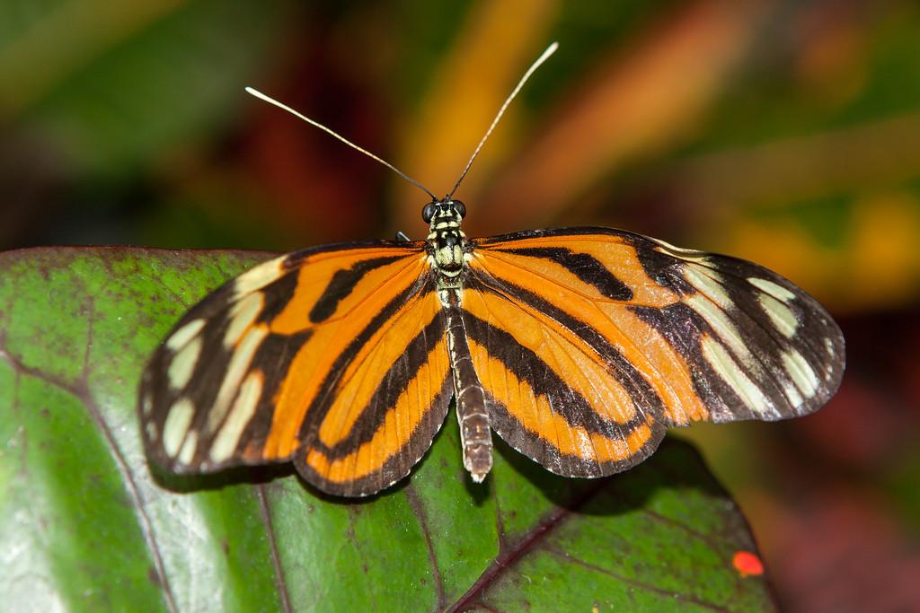 IMAGE: http://www.smugmug.com/photos/i-MbXWGBh/0/XL/i-MbXWGBh-XL.jpg