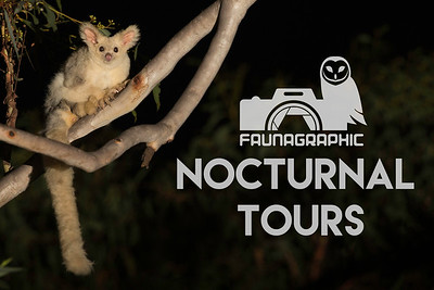 Nocturnal Wildlife Tours
