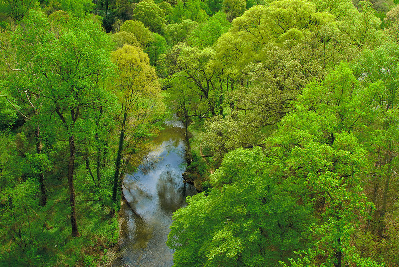 Rock Creek viewed from Taft Bridge in spring.  Unfolding new leaves paint the treetops in many shades of green and gold.