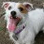 farley pups 073-2.jpg
