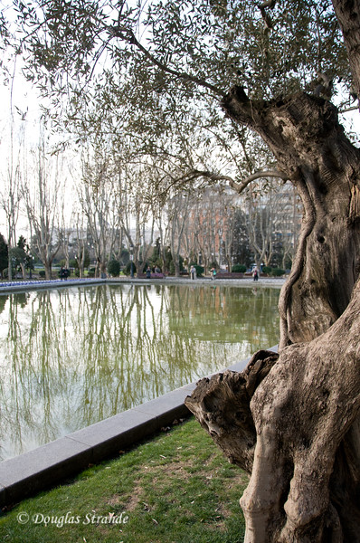 Tue 3/08 in Madrid: Olive tree and reflecting pool
