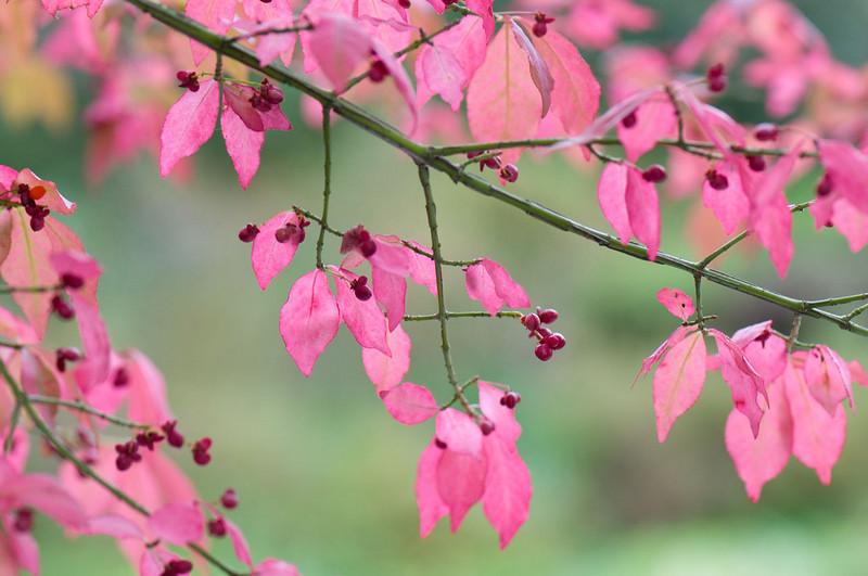 pink-leaves.jpg