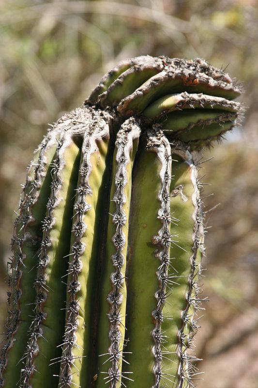 cactus at the zoo.jpg