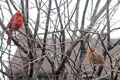 "NEW  PUPPY  ""MOON""  +  BIRDS   April 20, 2019"