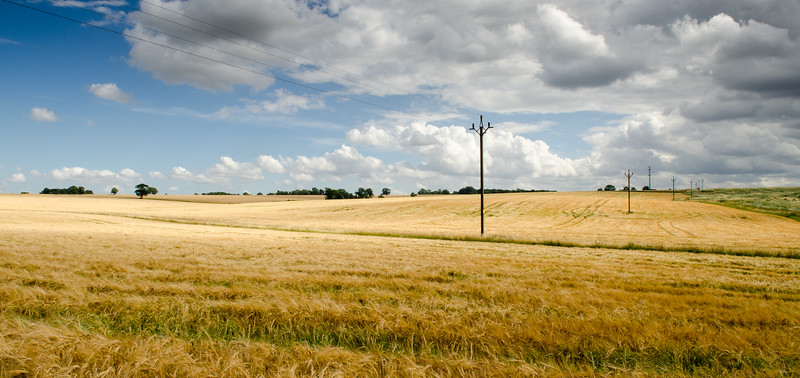 Power lines over Hertfordshire fields