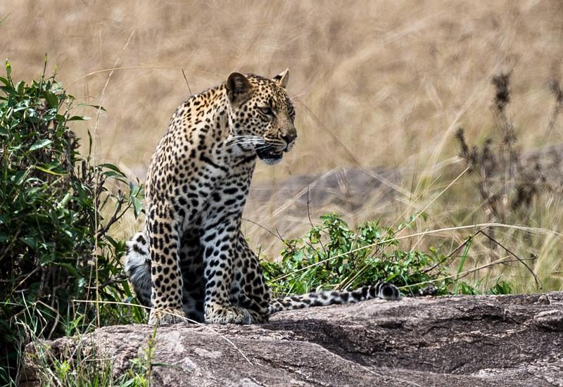 Kenya040.jpg