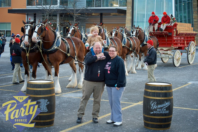 Clydesdale Portraits 206.jpg