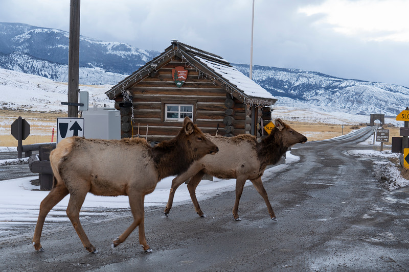 _AR70842 Elk at park entrance.jpg