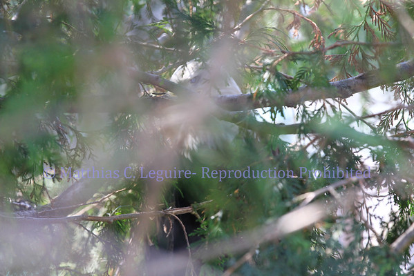 Toledo Zoo 8-25-2012