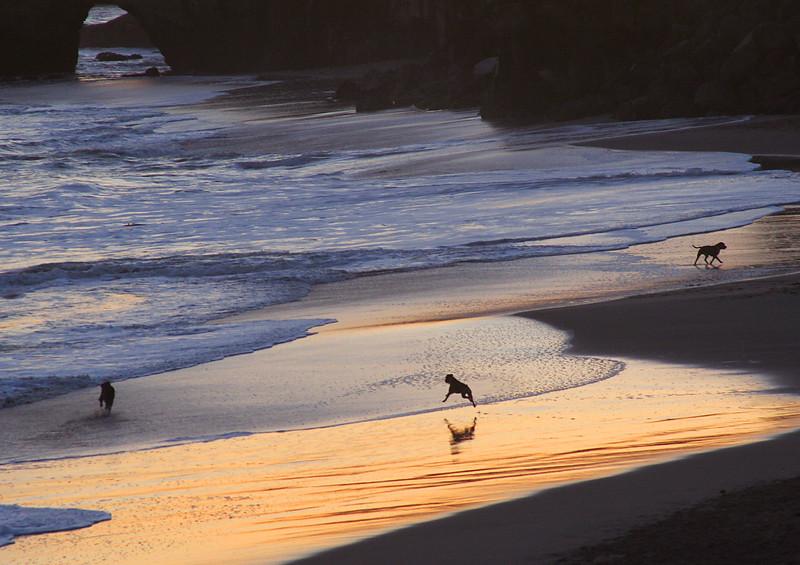 4153 Beach Dogs at Sunset.jpg