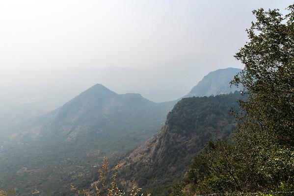 INDIA - Rajakkad Estate Palani Hills