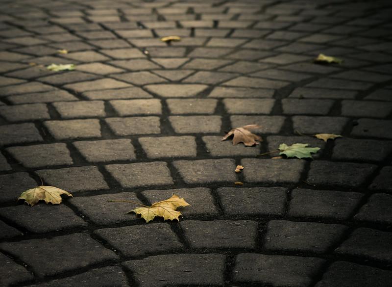 Pattern of Leaves-.jpg