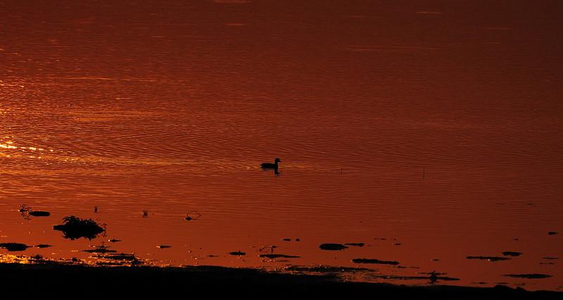 Sunset Point - Kaziranga, Assam, India