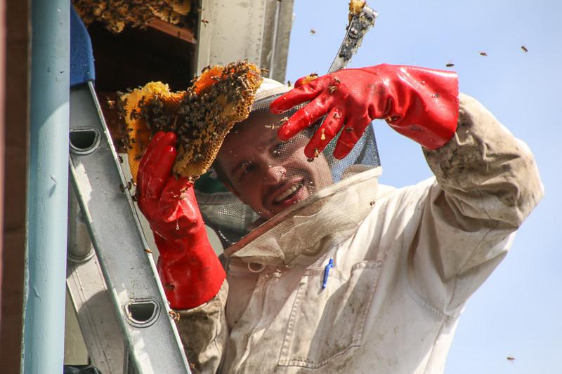 March 4 - Beekeeper.jpg