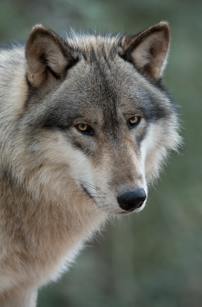 Seacrest Wolves_-27.jpg