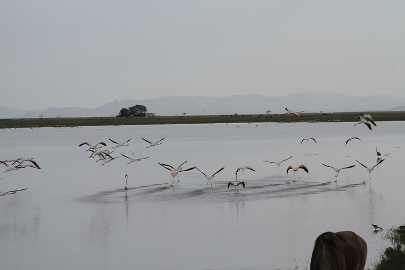 Kenya 2019 #2 2012.JPG