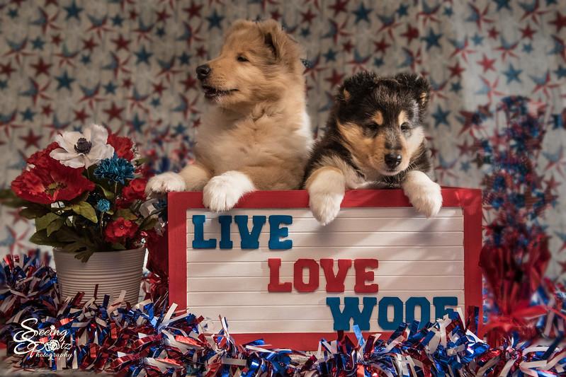 Charlie's Pups Week 6