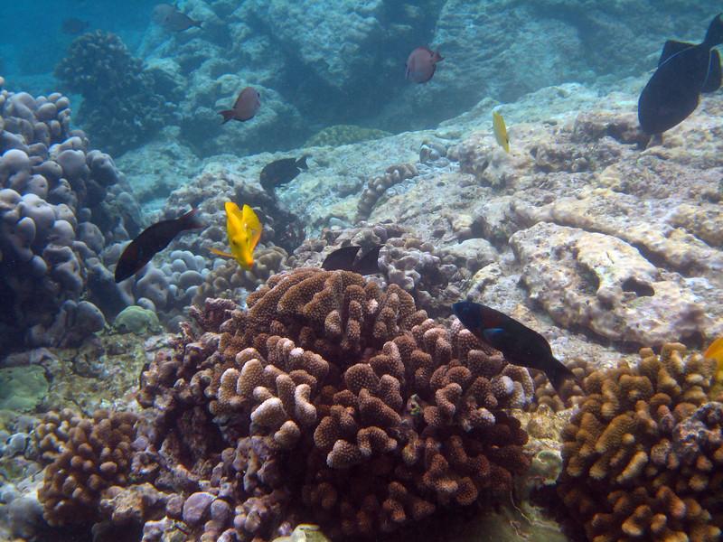 470- 20080416- Hawaii 20-Snorkelling IMG_0671.jpg