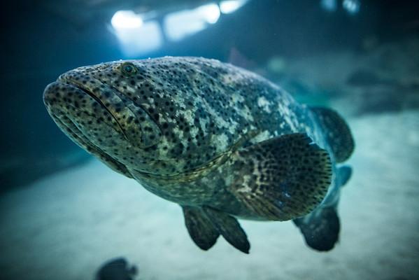 Cleveland Aquarium: August 2012 Display Shoot