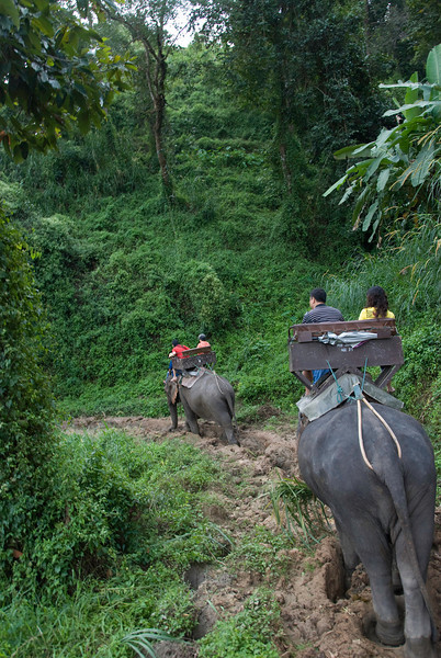 On our elephant ride