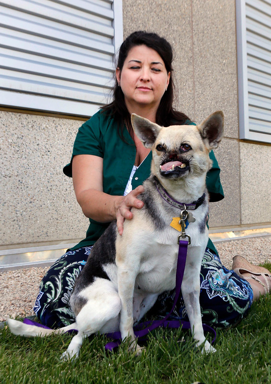 . Kabang, a two-year-old injured mixed breed, is photographed with her caregiver Dawn Gillette as she is released from the from the William R. Pritchard Veterinary Medical Teaching Hospital at the University of California, Davis, in Davis, Calif., Monday, June 3, 2013. Kabang lost her snout and upper jaw saving two girls\' lives and is heading back to the Philippines after treatment at a California hospital. (AP Photo/Rich Pedroncelli)