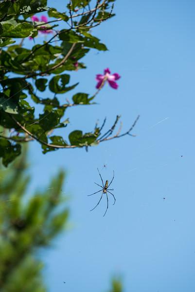 Spiders' Haven
