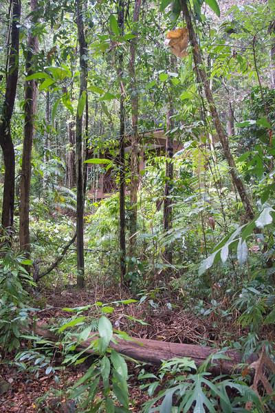 Borneo-2014-208.jpg