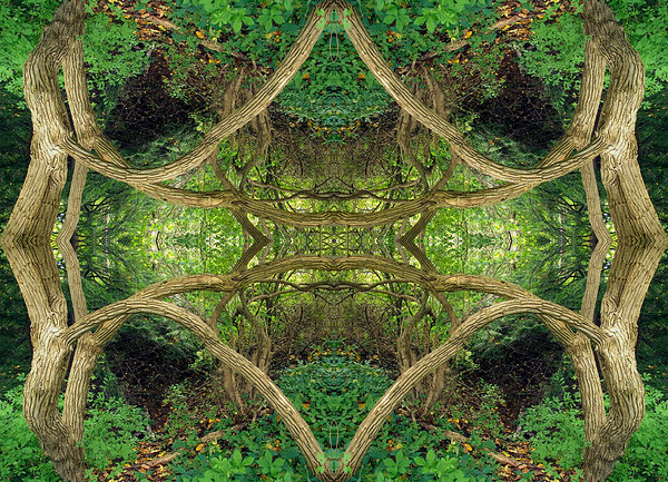 Mirror Montages