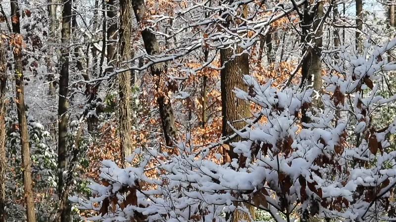 Snowy Trees Loop.mp4