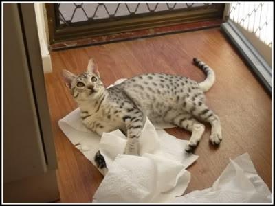 paper towel malika.jpg