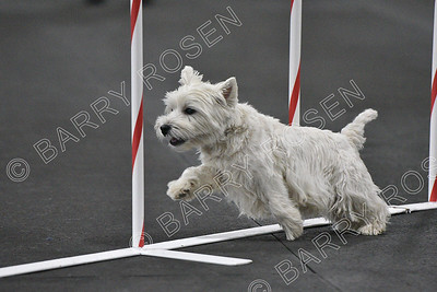 Westie Club of NE AKC Agility Trial, Jun 30-Jul 1, 2018
