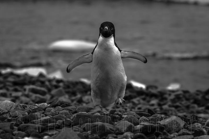 Antarctica: Wildlife, Ice and Snow Landscapes