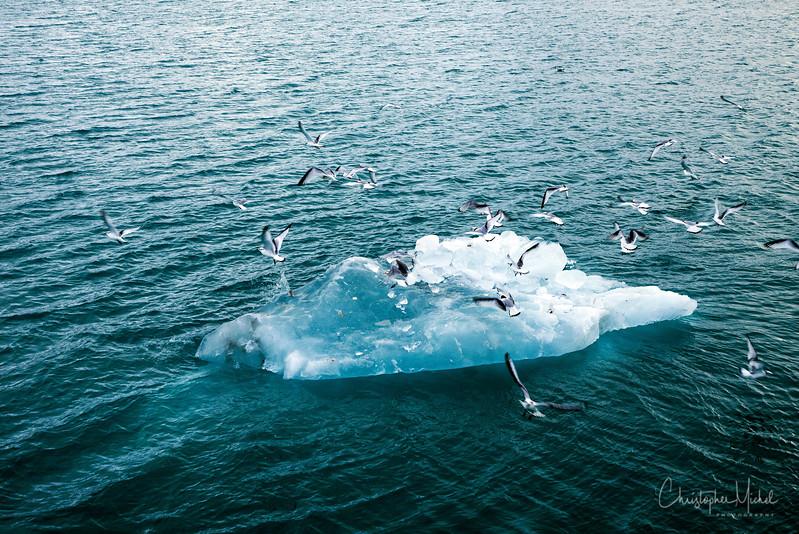 9-7-16181743monaco glacier.jpg