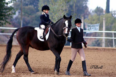 Morgan Horse Association Show 11-14-09