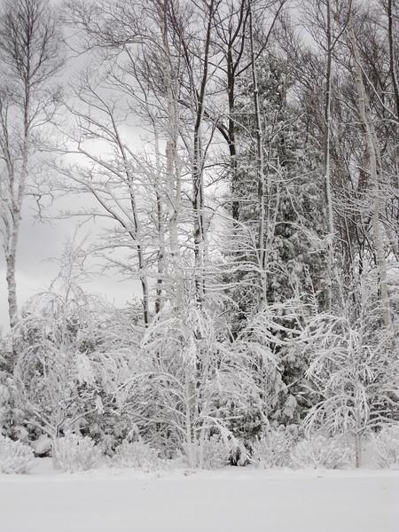 20091209_blizzard_011-9.jpg