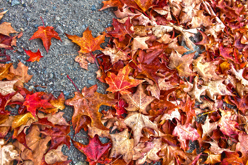 Fall_Colors_HDR7.jpg