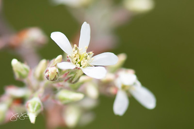 Spring Blossoms May 2021