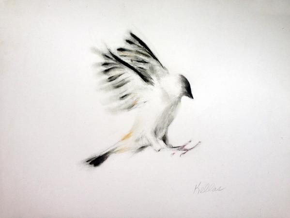 bird_af (1).jpg