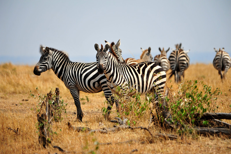 Africa 2010-081.JPG