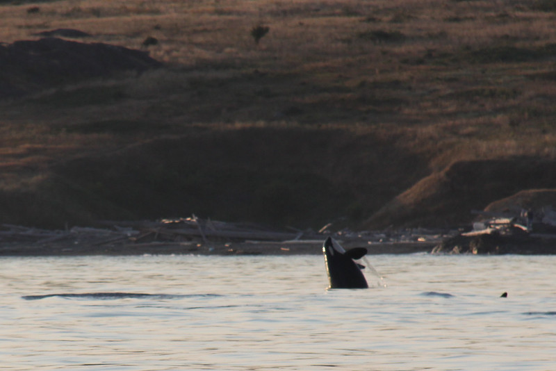 Alaska 2009-916.jpg