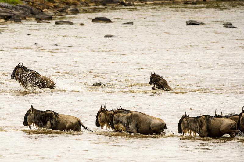 Kenya 2015-05616.jpg