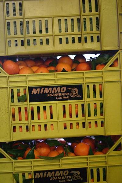 oranges-2_2087246577_o.jpg