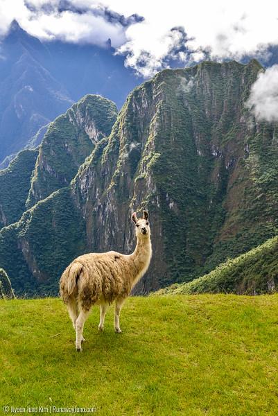 06.20_Machu Picchu-7640.jpg