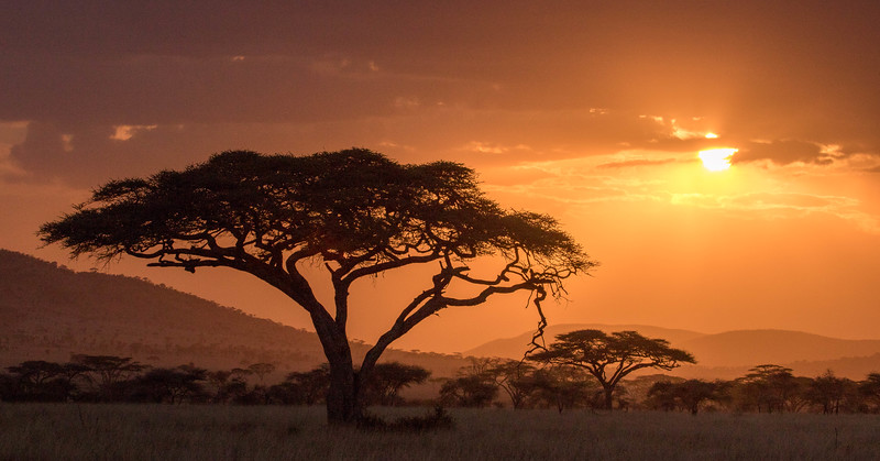 Acacia silhouettes and setting sun, Serengeti National Park