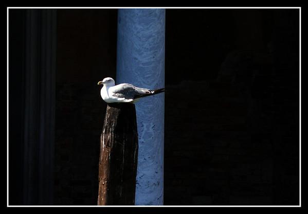 Venezia 2008 - Birds and Dogs