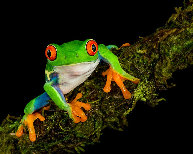 Frogscapes065_Cuchara_0008c_121116_193521_5DM3L.jpg