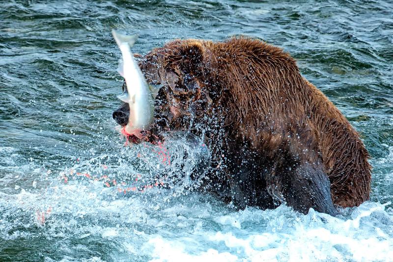 Alaska_2014_FH0T7677.jpg