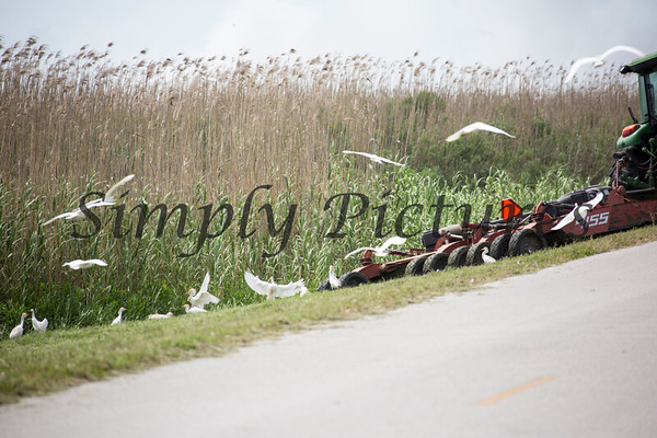 High Island Birding Shots