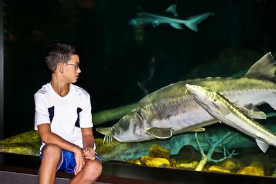 Tennessee Aquarium - Chattanooga, TN